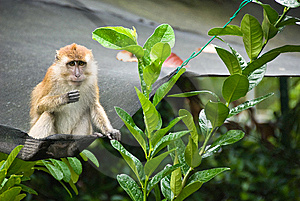 Monkey Stock Photo - Image: 8532320