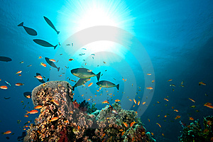 Coral, Ocean And Fish Royalty Free Stock Images - Image: 8532349