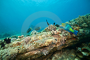 Coral, Ocean And Fish Stock Images - Image: 8532504
