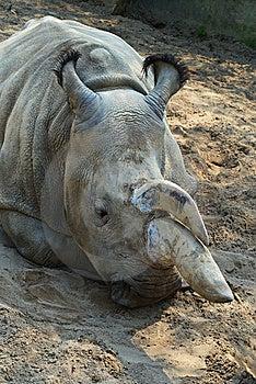 Rhinoceros-3 Royalty Free Stock Photo - Image: 8532635