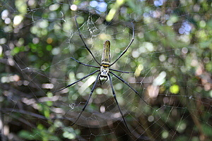 Spider And Web Stock Photos - Image: 8533393