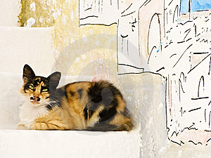 Greek Cat Resting On Steps Stock Images - Image: 8533434