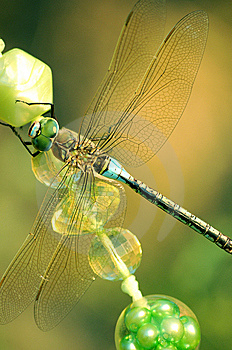 Dragonfly Stock Images - Image: 8533544