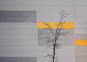 Tree. Royalty Free Stock Images - Image: 8533779