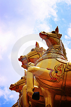 Golden Horse Stock Photo - Image: 8534650