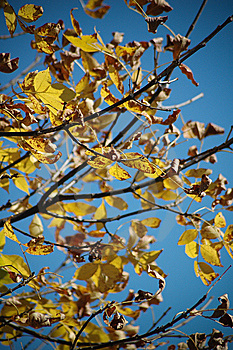 Leafs In Fall Royalty Free Stock Photography - Image: 8535487