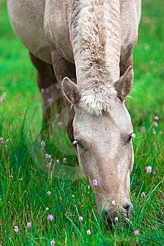 Horse Stock Photography - Image: 8535512