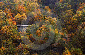 Forest In Autumn Stock Images - Image: 8535574