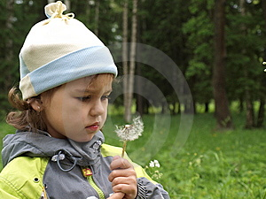 The Girl With Dandelion. Royalty Free Stock Photos - Image: 8537098