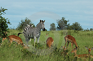 Africa Royalty Free Stock Photo - Image: 8537695