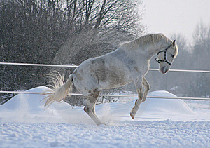 Horse Games Stock Photography - Image: 8537952