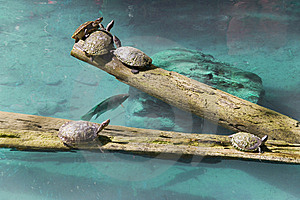 Fish And Turtles Meeting Royalty Free Stock Photography - Image: 8540237