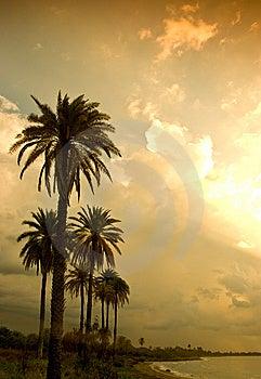 Tropical Sunset Royalty Free Stock Photo - Image: 8540255