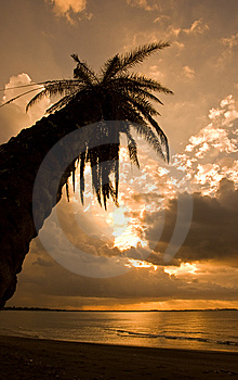 Tropical Sunset Stock Photos - Image: 8540303