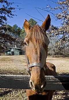 Closeup Of Horse Stock Photos - Image: 8540473