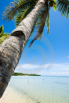 Tropical Beach And Palm Tree Stock Image - Image: 8540761