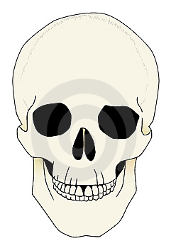 Skull Anatomical Illustration Royalty Free Stock Photos - Image: 8541288