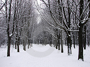 Winter Forest Stock Image - Image: 8541691