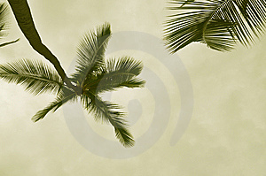 Sepia Palm Royalty Free Stock Photos - Image: 8542338