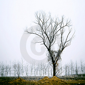 Tree Royalty Free Stock Photos - Image: 8542578