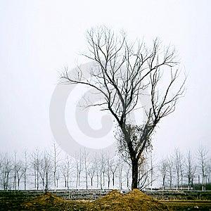 Tree Royalty Free Stock Photos - Image: 8542578