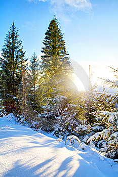 Winter Stock Photo - Image: 8544420