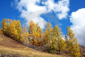 China/Xinjiang: Cloudscape In Kanas Stock Photos - Image: 8544673
