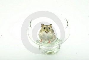 Hamster Stock Image - Image: 8545661