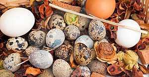 Clutch Of Quail Eggs Stock Photo - Image: 8545860