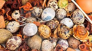 Quail Eggs Royalty Free Stock Photography - Image: 8545877