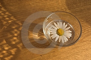 Daisy In A Glass Royalty Free Stock Image - Image: 8546276