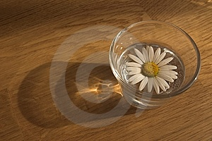 Daisy In A Glass Royalty Free Stock Photos - Image: 8546278