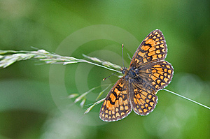 Butterfly On Green Royalty Free Stock Photos - Image: 8547428
