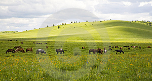Horses And Grassland Royalty Free Stock Image - Image: 8548706