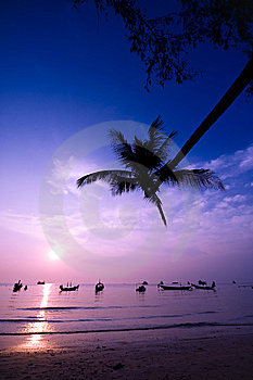 Silhouette Of A Palm Tree The Sea At Sunrise Royalty Free Stock Photography - Image: 8553827