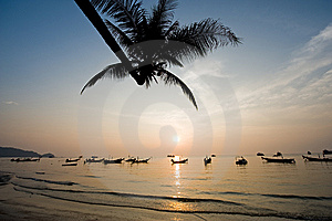 Silhouette Of Palm Tree During Sunset Royalty Free Stock Image - Image: 8553896
