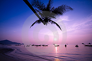 Silhouette Of A Palm Tree The Sea At Sunrise Stock Images - Image: 8553914