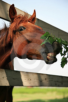 Horse Close Up Stock Image - Image: 8555831