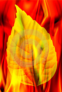 Leaf And Fire Stock Photo - Image: 8556070