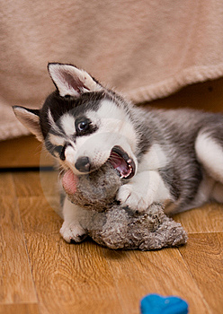 Puppy Stock Photography - Image: 8557422