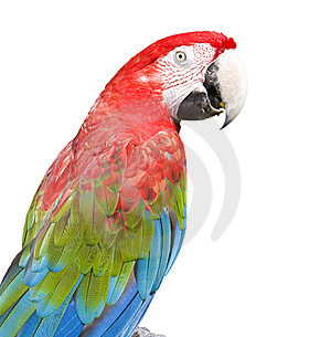 Macaw Royalty Free Stock Photos - Image: 8557558