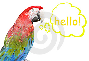 Macaw Stock Images - Image: 8557584
