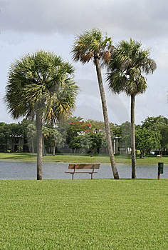 Three Palms And A Bench Stock Photos - Image: 8557713