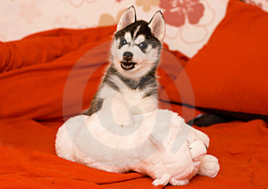 Dog Royalty Free Stock Photos - Image: 8557858