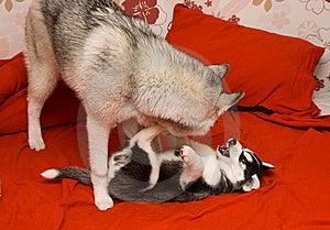 Dog Stock Photo - Image: 8557910