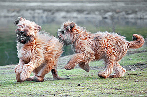 Dogs Stock Images - Image: 8558984