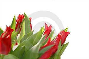 Bright Tulips Stock Photo - Image: 8559210