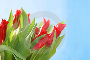 Bouquet Stock Image - Image: 8559231
