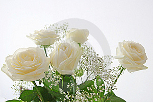 White Roses Stock Images - Image: 8559264