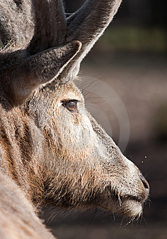 Reindeer Stock Photos - Image: 8559323